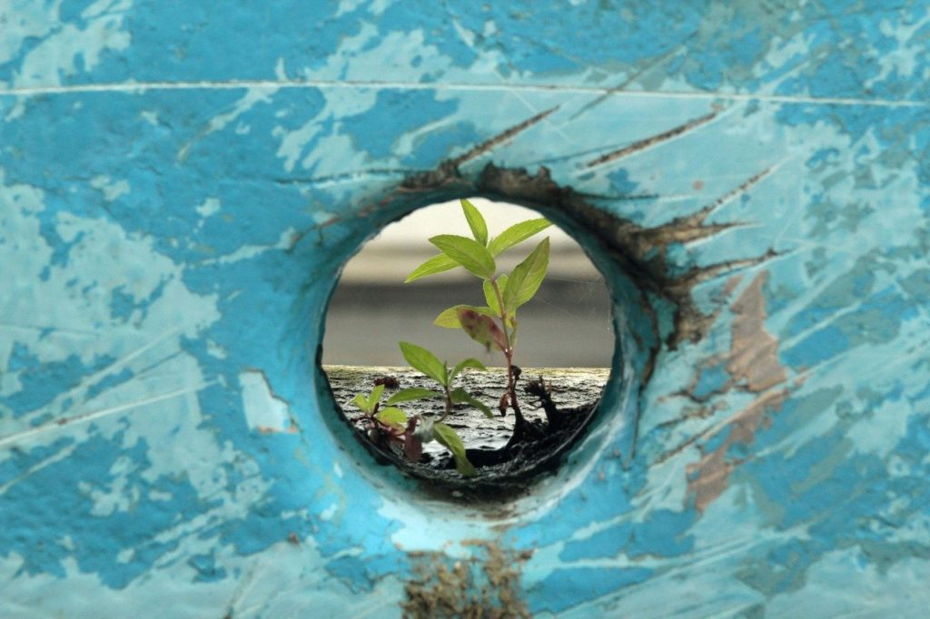 plant in hole