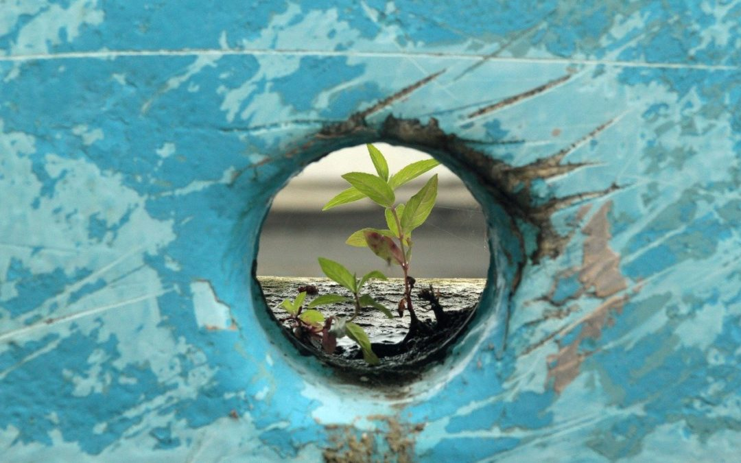 Building Resilience in Hard Times